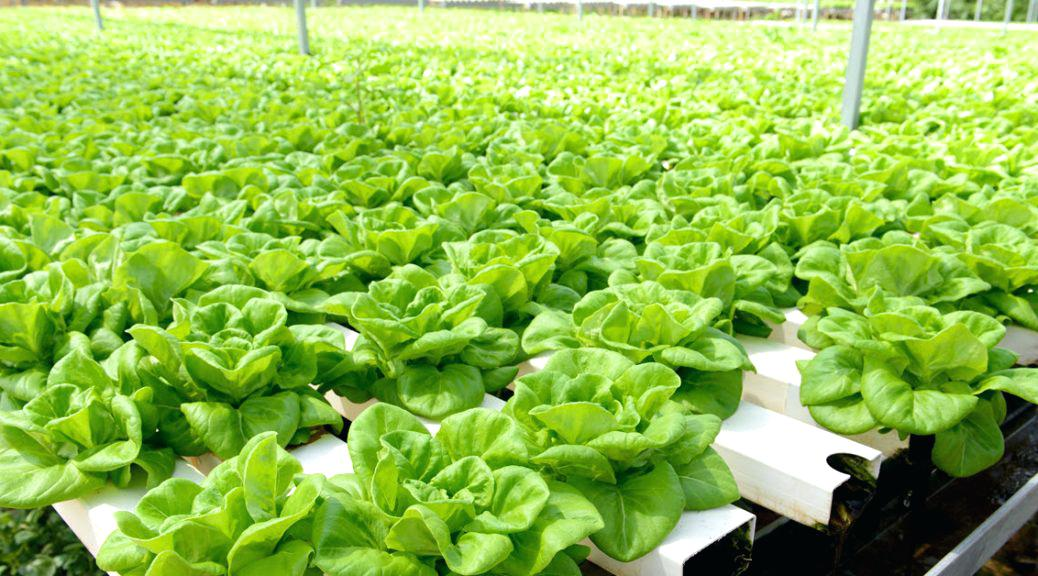 Creating A Beautiful Superb Garden Requires The Right Garden or Hydroponic Supplies